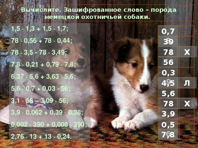 Вычислите. Зашифрованное слово – порода немецкой охотничьей собаки. 1 ,5 · 1,3 + 1,5 · 1,7; 78 · 0,56 + 78 · 0 ,44; 78 · 3,5 - 78 · 3,49; 7,8 · 0,21 + 0,79 · 7,8; 6,37 · 5,6 + 3,63 · 5,6; 5,6 · 0,7 + 0,03 · 56; 3,1 · 56 – 3,09 · 56; 3,9 · 0,062 + 0,39 · 0,38; 0,002 · 390 + 0,008 · 390; 2,76 · 13 + 13 · 0,24. 0,78 39 Х 78  56 0,39 Л 4,5 5,6 Х 78 3,9 0,56 7,8