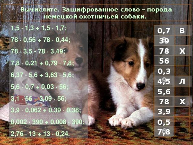 Вычислите. Зашифрованное слово – порода немецкой охотничьей собаки. 1 ,5 · 1,3 + 1,5 · 1,7; 78 · 0,56 + 78 · 0,44; 78 · 3,5 - 78 · 3,49; 7,8 · 0,21 + 0,79 · 7,8; 6,37 · 5,6 + 3,63 · 5,6; 5,6 · 0,7 + 0,03 · 56; 3,1 · 56 – 3,09 · 56; 3,9 · 0,062 + 0,39 · 0,38; 0,002 · 390 + 0,008 · 390; 2,76 · 13 + 13 · 0,24. В 0,78 39 Х 78 56  0,39 Л 4,5 5,6 Х 78 3,9 0,56 7,8
