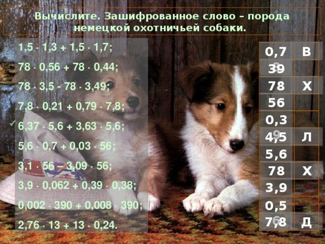 Вычислите. Зашифрованное слово – порода немецкой охотничьей собаки. 1 ,5 · 1,3 + 1,5 · 1,7; 78 · 0,56 + 78 · 0,44; 78 · 3,5 - 78 · 3,49; 7,8 · 0,21 + 0,79 · 7,8; 6,37 · 5,6 + 3,63 · 5,6; 5,6 · 0,7 + 0,03 · 56; 3,1 · 56 – 3,09 · 56; 3,9 · 0,062 + 0,39 · 0,38; 0,002 · 390 + 0,008 · 390; 2,76 · 13 + 13 · 0,24. В 0,78 39 Х 78 56 0,39  Л 4,5 5,6 Х 78 3,9 0,56 Д 7,8