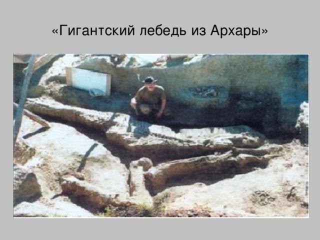 «Гигантский лебедь из Архары»
