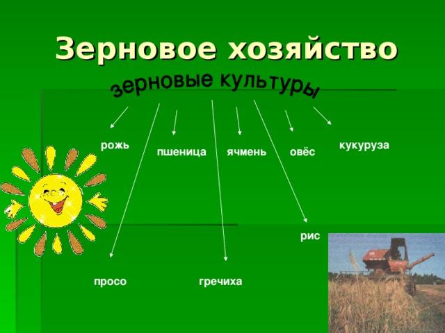 Зерновое хозяйство рожь кукуруза ячмень пшеница овёс рис просо гречиха