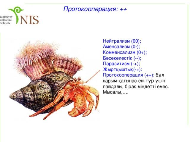 Комменсализм: 0+ Нейтрализм (00); Аменсализм (-0); Комменсализм (0+): комменсал басқа түрден пайда көреді, ал ол түрге ешқандай әсер етпейді. Мысалы, акула мен жабысқақ балықтар, арыстандардан қалған ас қалдықтарымен қоректенетін тазқара, гиеналар.