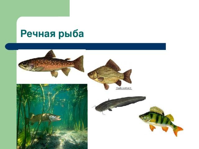 Речная рыба