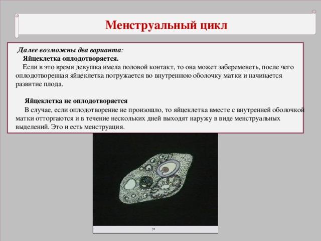 Менструальный цикл  Далее возможны два варианта :  Яйцеклетка оплодотворяется.  Если в это время девушка имела половой контакт, то она может забеременеть, после чего оплодотворенная яйцеклетка погружается во внутреннюю оболочку матки и начинается развитие плода.  Яйцеклетка не оплодотворяется  В случае, если оплодотворение не произошло, то яйцеклетка вместе с внутренней оболочкой матки отторгаются и в течение нескольких дней выходят наружу в виде менструальных выделений. Это и есть менструация.