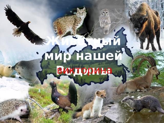 Животный мир нашей Родины викторина