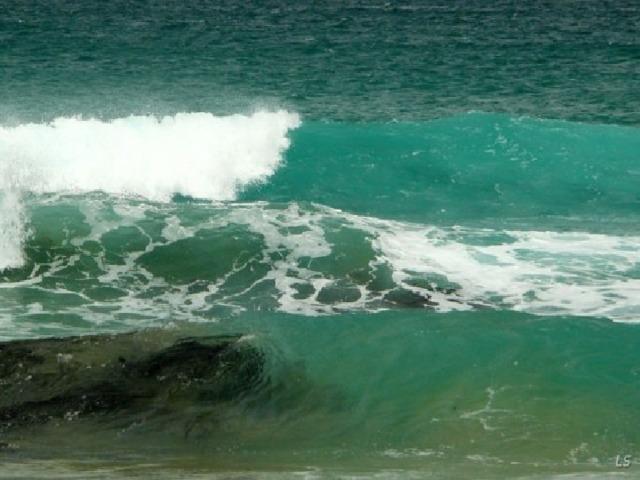 Зеленое (Саргассово) море Однажды моряки Колумба закричали: «Земля! Земля!». Но то, что издали приняли за сушу, на самом деле было…водорослями. Их тут плавало столько, что в некоторых местах вода казалась покрытой зеленовато-бурым ковром. Ученые называют такие водоросли саргассы