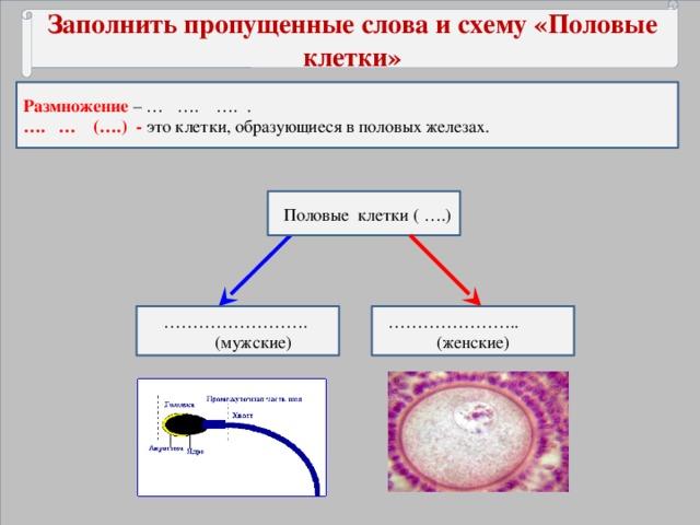 Заполнить пропущенные слова и схему «Половые клетки» Размножение – … …. …. . … . … (….) - это клетки, образующиеся в половых железах.  Половые клетки ( ….) ………………… .. …………………… . (мужские) (женские)