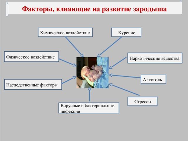 Факторы, влияющие на развитие зародыша  Химическое воздействие  Курение Физическое воздействие Наркотические вещества Алкоголь Наследственные факторы  Стрессы Вирусные и бактериальные инфекции