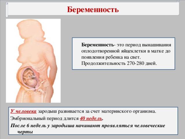 Беременность Беременность - это период вынашивания оплодотворенной яйцеклетки в матке до появления ребенка на свет. Продолжительность 270-280 дней. У человека  зародыш развивается за счет материнского организма. Эмбриональный период длится 40 недель . После 6 недель у зародыша начинают проявляться человеческие черты