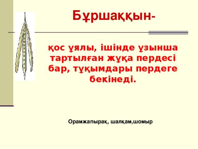 Бұршаққын -  қос ұялы, ішінде ұзынша тартылған жұқа пердесі бар, тұқымдары пердеге бекінеді. Орамжапырақ, шалқам,шомыр