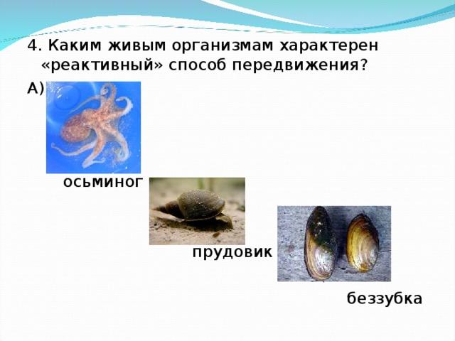 4. Каким живым организмам характерен «реактивный» способ передвижения? А)  осьминог  Б)  прудовик  В)  беззубка