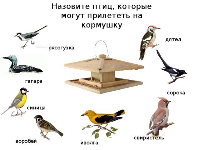 какие птицы прилетают зимой к кормушкам фото без того