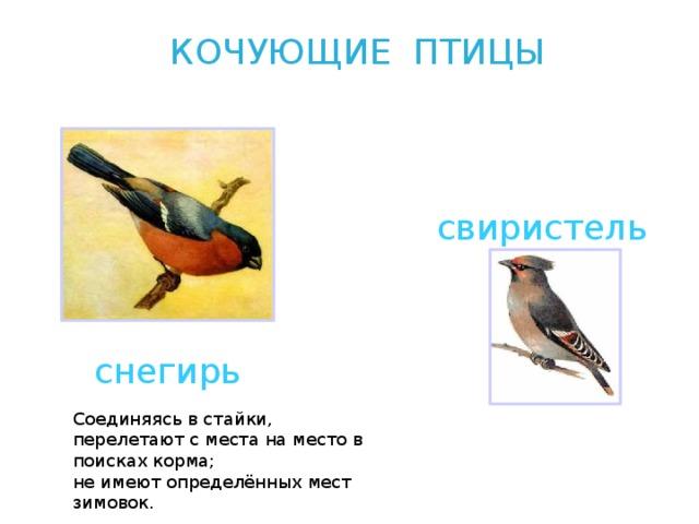 Фото птиц хмао с описанием