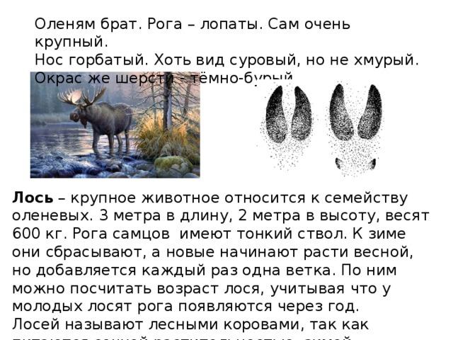 звери хмао югры фото и описание пони тёмно-бежевый пони