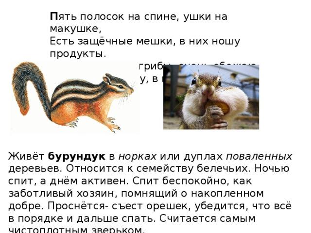всех звери хмао югры фото и описание изготавливаем индивидуально для