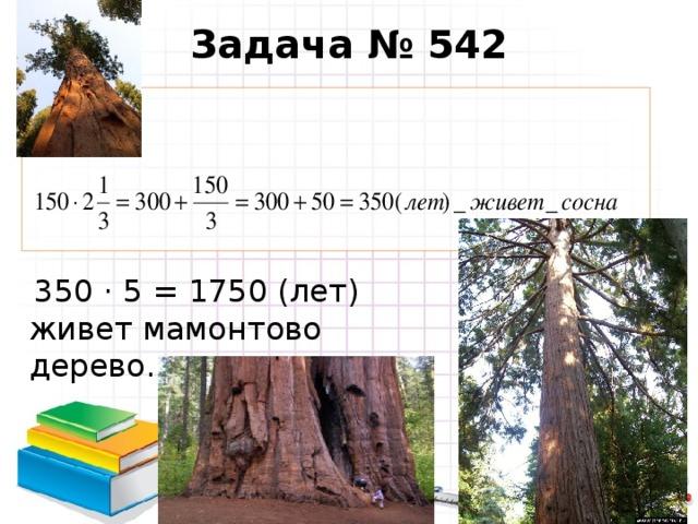 Задача № 542  350 · 5 = 1750 (лет) живет мамонтово дерево.
