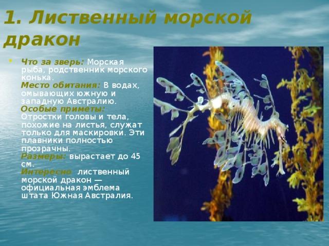 1. Лиственный морской дракон