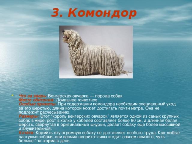 3. Комондор