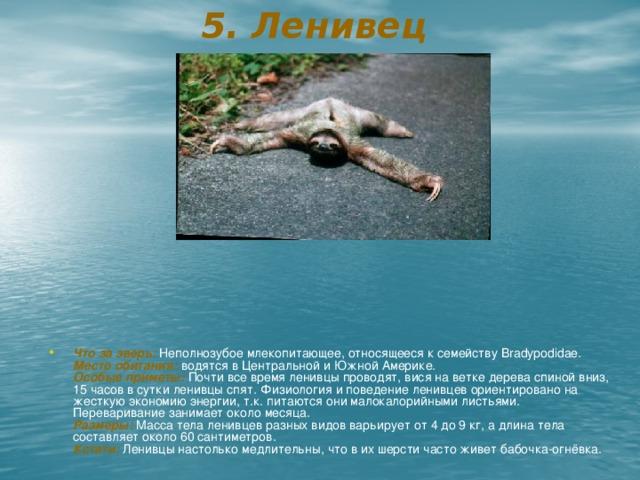 5. Ленивец