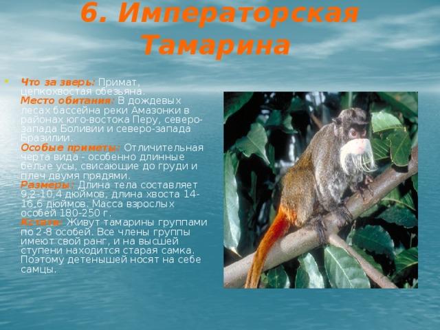 6. Императорская Тамарина