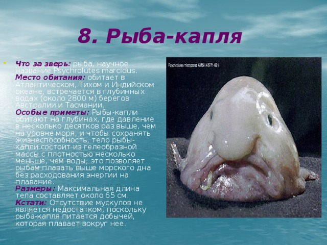 8. Рыба-капля