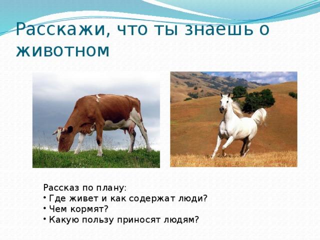 Расскажи, что ты знаешь о животном Рассказ по плану: