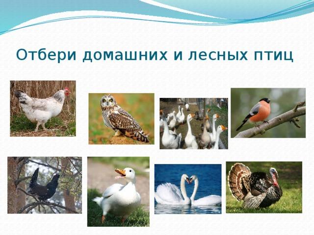 Отбери домашних и лесных птиц