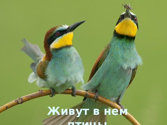 Живут в нем птицы