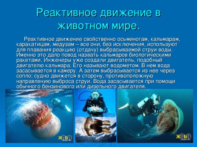 Реактивное движение в животном мире.  Реактивное движение свойственно осьминогам, кальмарам, каракатицам, медузам – все они, без исключения, используют для плавания реакцию (отдачу) выбрасываемой струи воды. Именно это дало повод назвать кальмаров биологическими ракетами. Инженеры уже создали двигатель, подобный двигателю кальмара. Его называют водометом. В нем вода засасывается в камеру. А затем выбрасывается из нее через сопло; судно движется в сторону, противоположную направлению выброса струи. Вода засасывается при помощи обычного бензинового или дизельного двигателя.