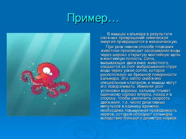 Пример…  В мышцах кальмара в результате сложных превращений химическая энергия превращается в механическую.  При реактивном способе плавания животное производит засасывание воды через широко открытую мантийную щель в мантийную полость. Сила, вызывающая движение животного, создается за счет выбрасывания струи воды через узкое сопло, которое расположено на брюшной поверхности кальмара. Это сопло снабжено специальным клапаном, и мышцы могут его поворачивать. Изменяя угол установки воронки, кальмар плывет одинаково хорошо вперед, назад и в сторону. Чтобы увеличить скорость движения, т.е. число реактивных импульсов в единицу времени, необходима повышенная проводимость нервов, которой обладают кальмары вследствие большого диаметра нервов.
