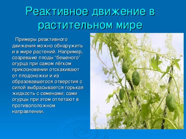 """Реактивное движение в растительном мире  Примеры реактивного движения можно обнаружить и в мире растений. Например, созревшие плоды """"бешеного"""" огурца при самом лёгком прикосновении отскакивают от плодоножки и из образовавшегося отверстия с силой выбрасывается горькая жидкость с семенами; сами огурцы при этом отлетают в противоположном направлении."""