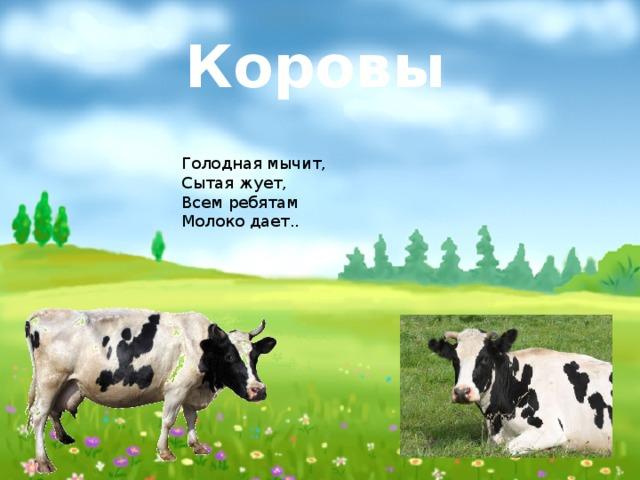 Коровы Голодная мычит, Сытая жует, Всем ребятам Молоко дает..