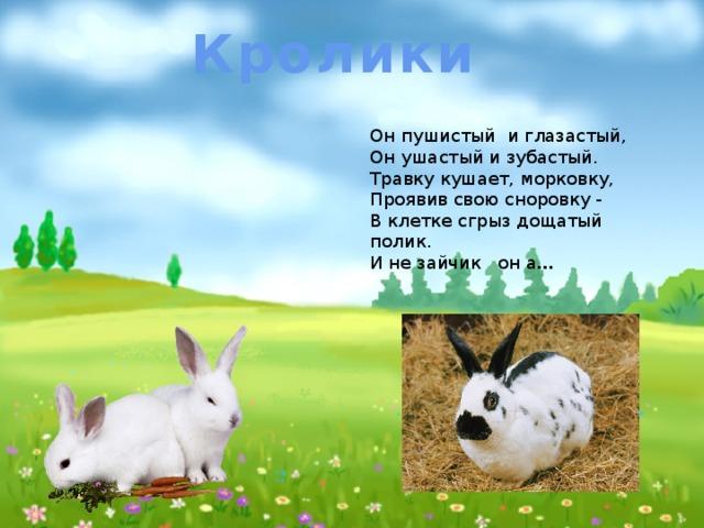 Кролики Он пушистый и глазастый,  Он ушастый и зубастый.  Травку кушает, морковку,  Проявив свою сноровку -  В клетке сгрыз дощатый полик.  И не зайчик он а …