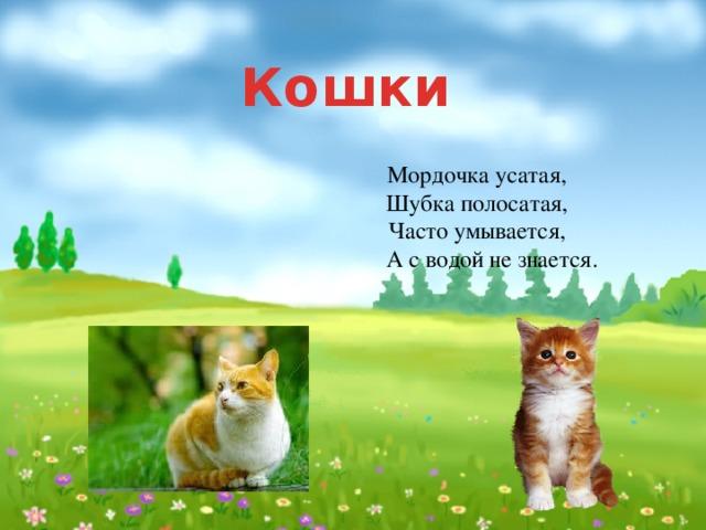 Кошки Мордочка усатая,  Шубка полосатая,  Часто умывается,  А с водой не знается.