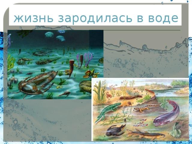 жизнь зародилась в воде