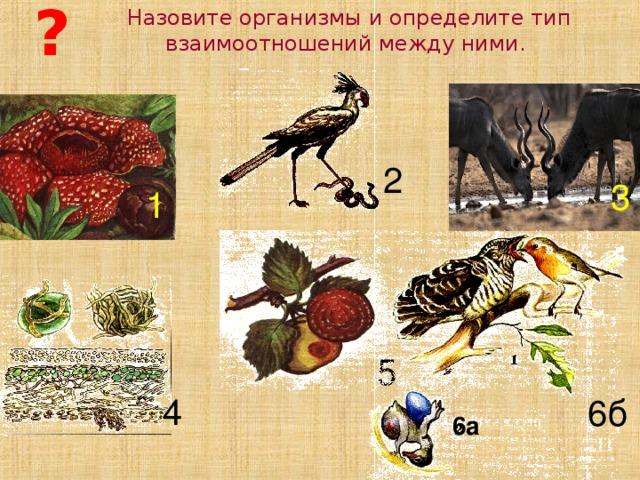 ? Назовите организмы и определите тип взаимоотношений между ними. 2 3 1 5 4 6б 6а