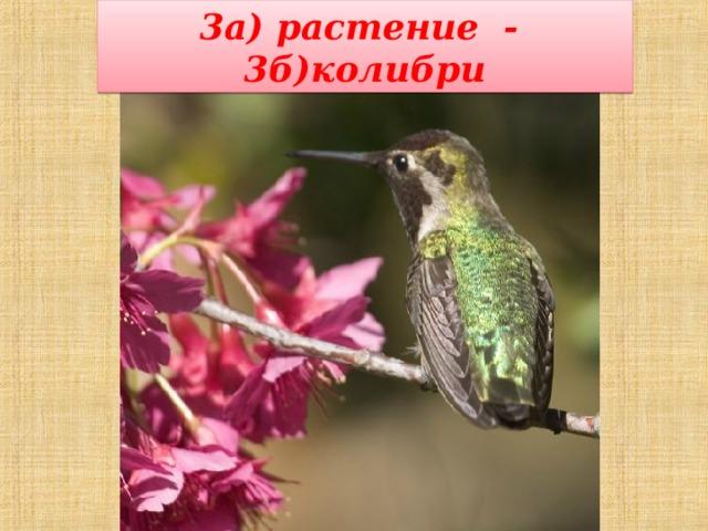 3а) растение - 3б)колибри