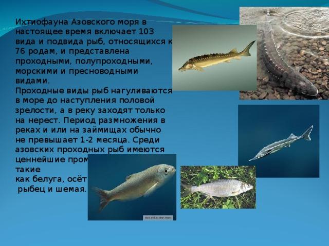 платья наличии рыбы азовского моря названия и фото бляшки