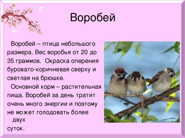 Воробей  Воробей – птица небольшого  размера. Вес воробья от 20 до  35 граммов. Окраска оперения  буровато-коричневая сверху и  светлая на брюшке.  Основной корм – растительная  пища. Воробей за день тратит  очень много энергии и поэтому  не может голодовать более двух  суток.