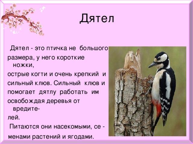 Дятел  Дятел - это птичка не большого  размера, у него короткие ножки,  острые когти и очень крепкий и  сильный клюв. Сильный клюв и  помогает дятлу работать им  освобождая деревья от вредите-  лей.  Питаются они насекомыми, се -  менами растений и ягодами.