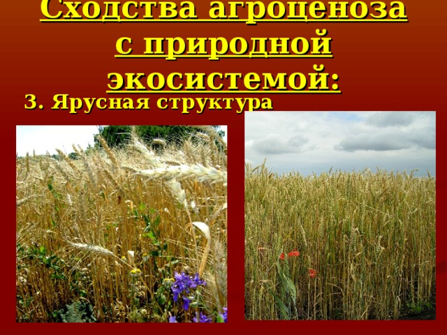 Сходства агроценоза с природной экосистемой: 3. Ярусная структура