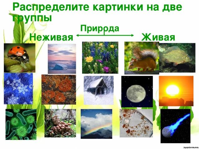 Распределите картинки на две группы Природа  Неживая  Живая
