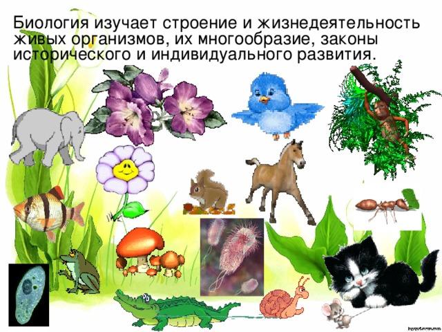 Биология изучает строение и жизнедеятельность живых организмов, их многообразие, законы исторического и индивидуального развития.