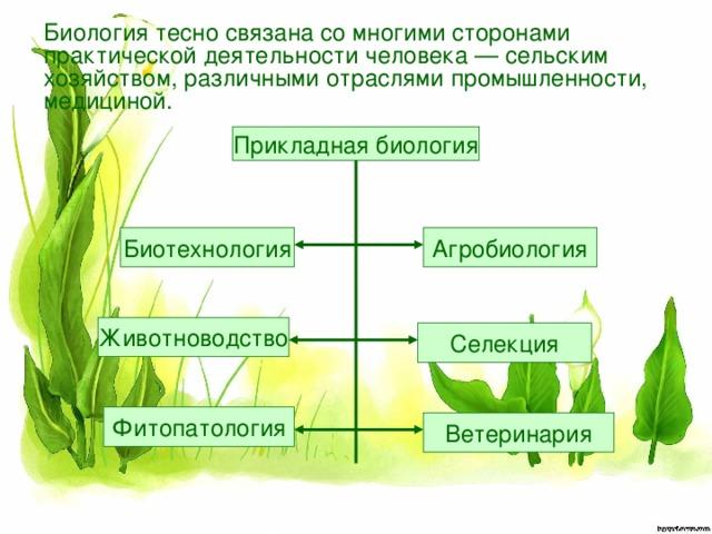 Биология тесно связана со многими сторонами  практической деятельности человека — сельским  хозяйством, различными отраслями промышленности,  медициной. Прикладная биология Биотехнология Агробиология Животноводство Селекция Фитопатология Ветеринария