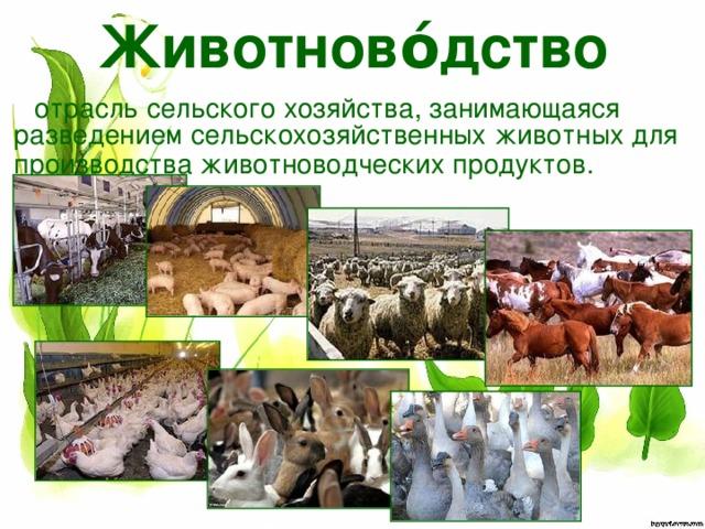 Животново́дство отрасль сельского хозяйства, занимающаяся разведением сельскохозяйственных животных для производстваживотноводческих продуктов.