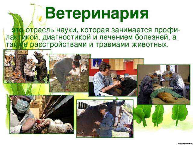 Ветеринария это отрасль науки, которая занимается профи-лактикой, диагностикой илечением болезней, а также расстройствами и травмами животных.