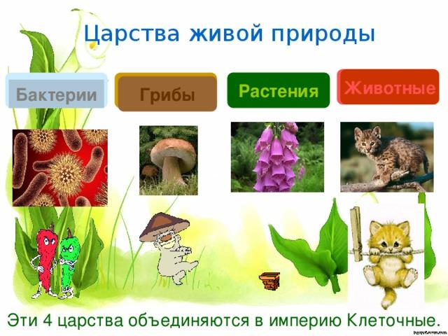 Царства живой природы ? Животные ? ? Растения ? Грибы Бактерии Эти 4 царства объединяются в империю Клеточные.
