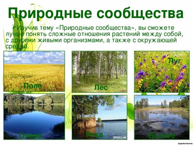 Природные сообщества Изучив тему «Природные сообщества», вы сможете лучше понять сложные отношения растений между собой, с другими живыми организмами, а также с окружающей средой. Луг Поле Лес Река Озеро Болото