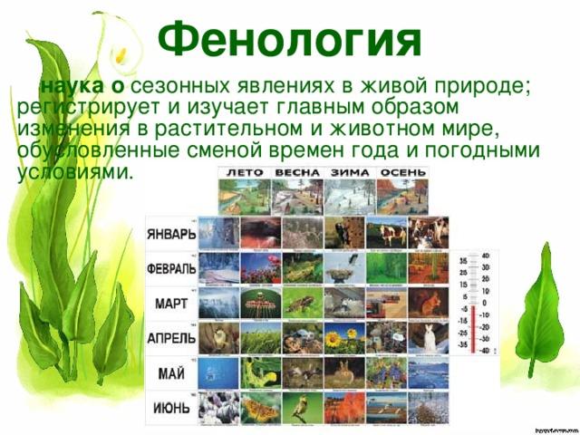 Фенология наука  о сезонных явлениях в живой природе; регистрирует и изучает главнымобразом изменения в растительном и животном мире, обусловленныесменой времен года и погодными условиями.