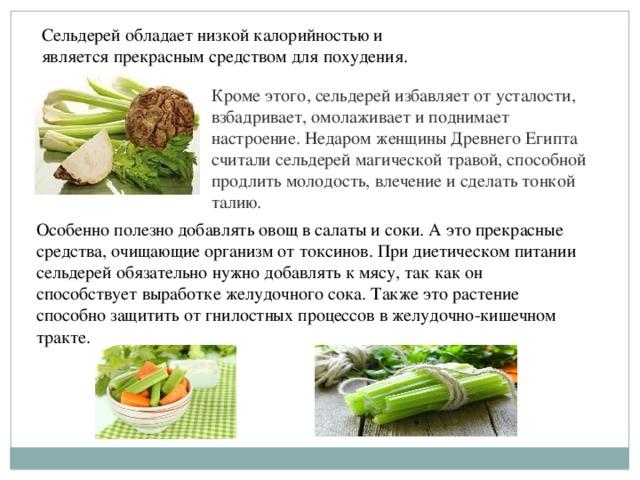 Корень сельдерея способствует похудению